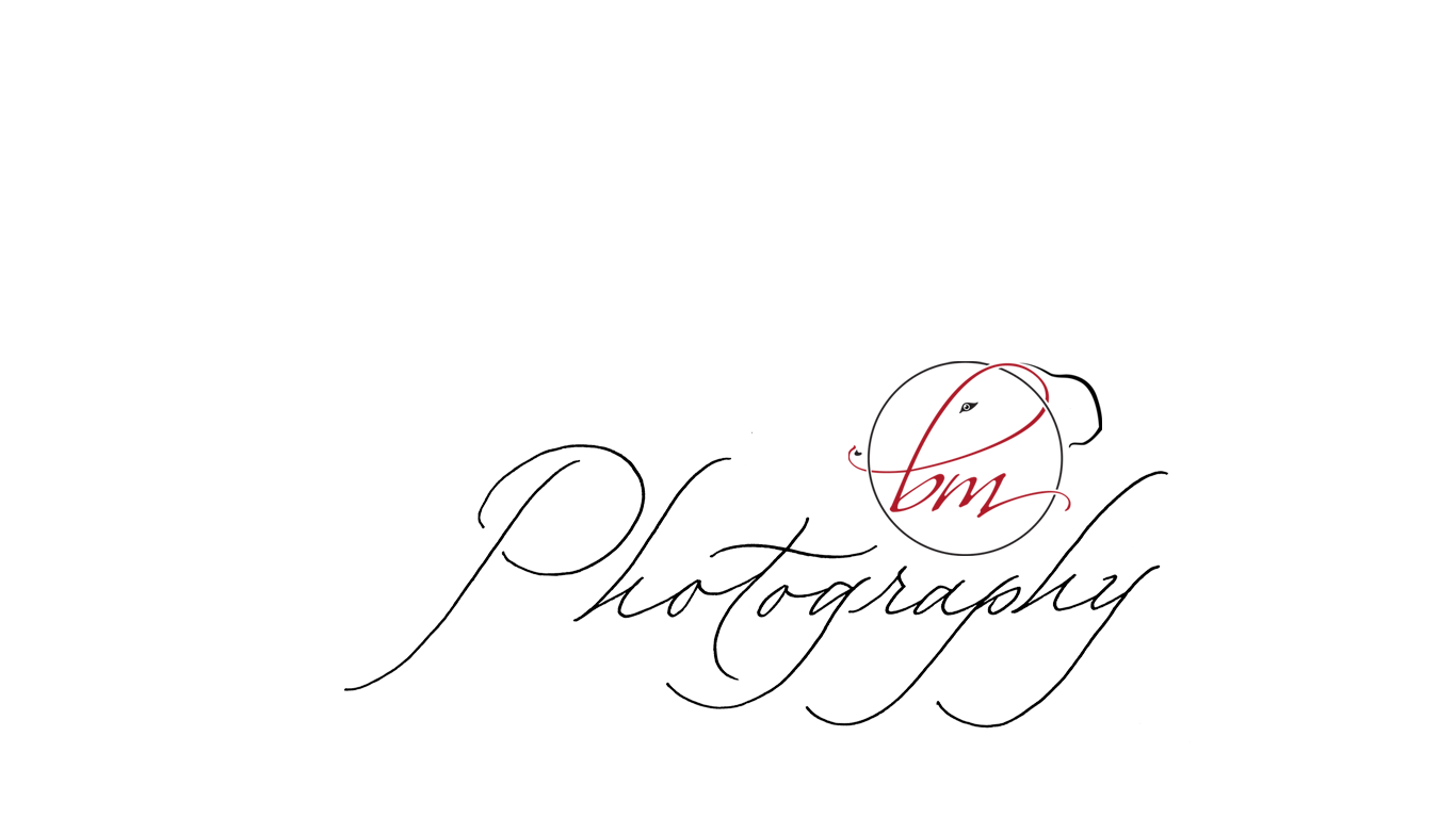 Chicago Wedding Photographer-Photography