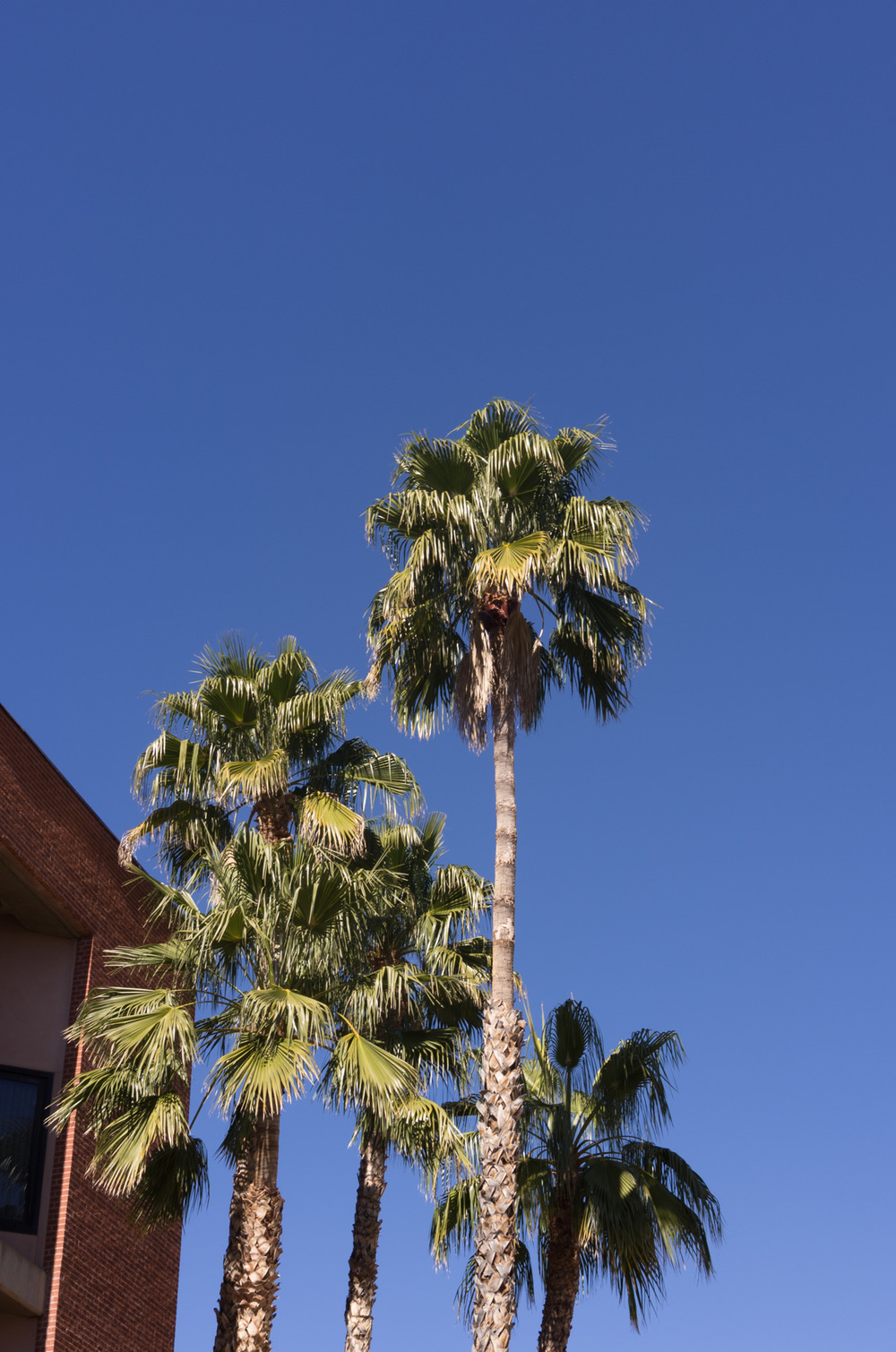 Tucson Day 1-5.jpg