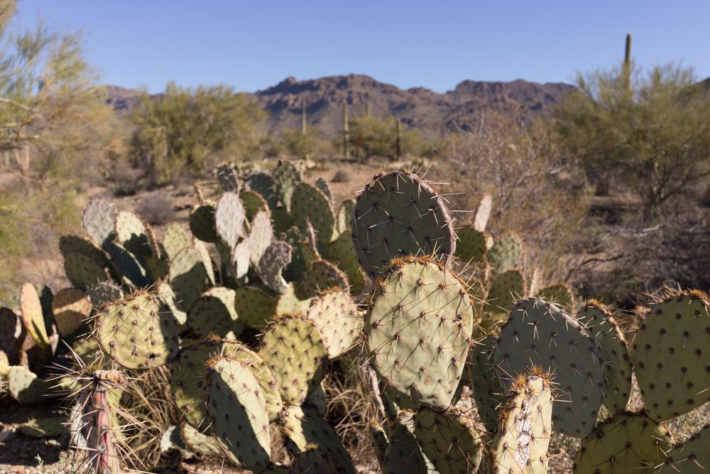 Tucson Day 4-5-12.jpg