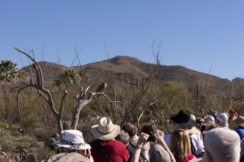 Tucson Day 4-5-16.jpg