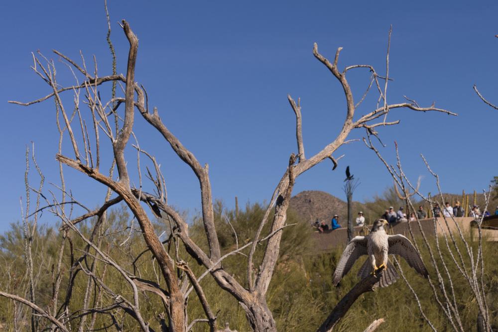 Tucson Day 4-5-17.jpg