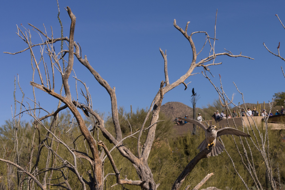 Tucson Day 4-5-18.jpg