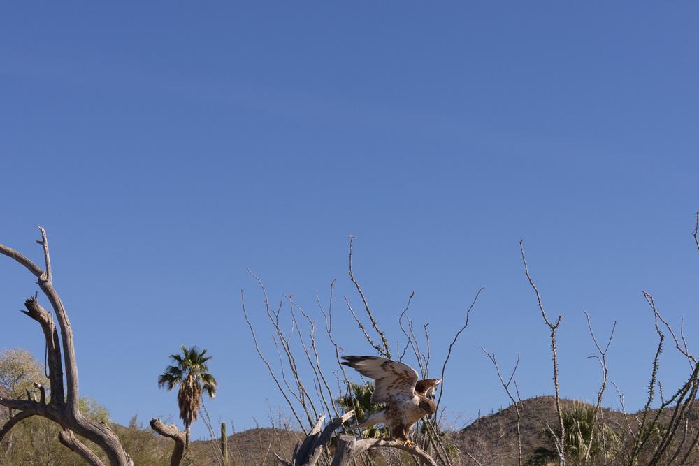 Tucson Day 4-5-20.jpg
