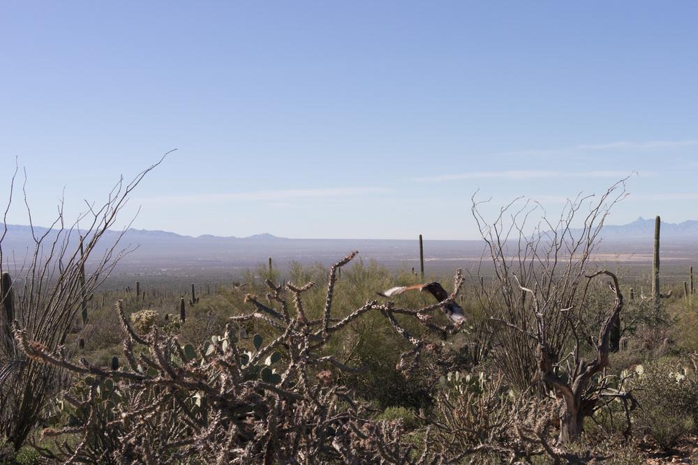 Tucson Day 4-5-19.jpg