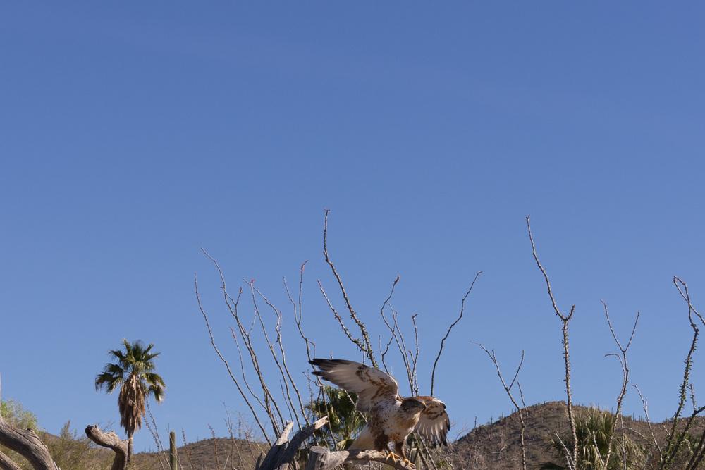 Tucson Day 4-5-21.jpg
