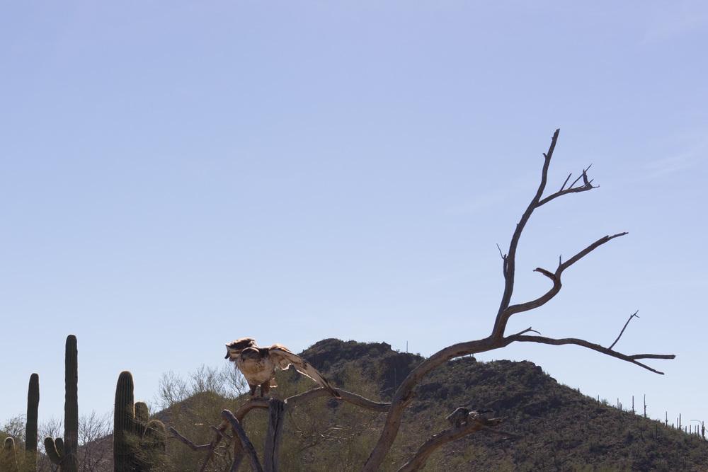 Tucson Day 4-5-22.jpg