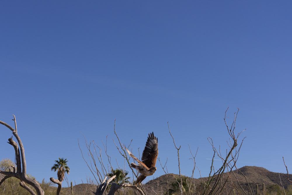 Tucson Day 4-5-23.jpg