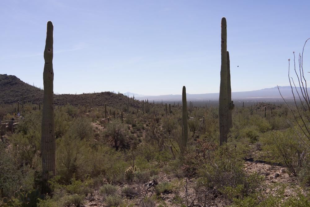 Tucson Day 4-5-31.jpg