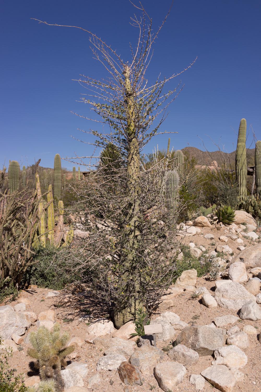 Tucson Day 4-5-38.jpg