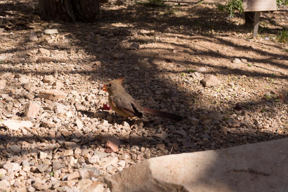 Tucson Day 4-5-42.jpg