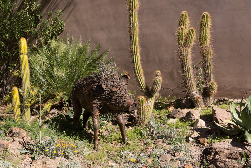 Tucson Day 4-5-54.jpg