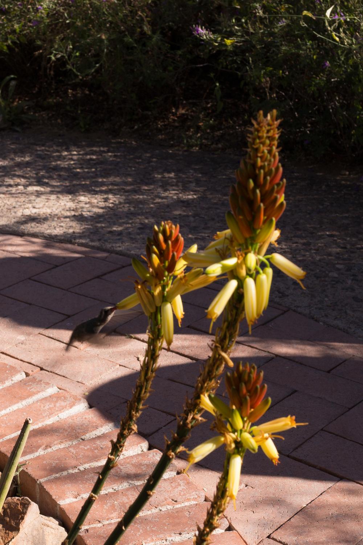 Tucson Day 4-5-64.jpg