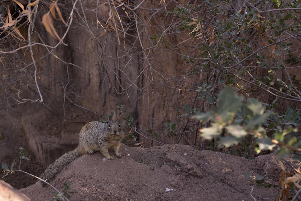 Tucson Day 4-5-89.jpg