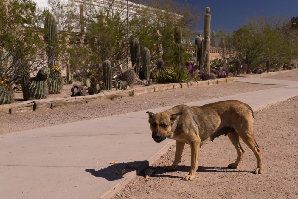 Tucson Day 6-22.jpg