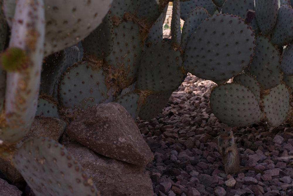 Tucson Day 7-30.jpg
