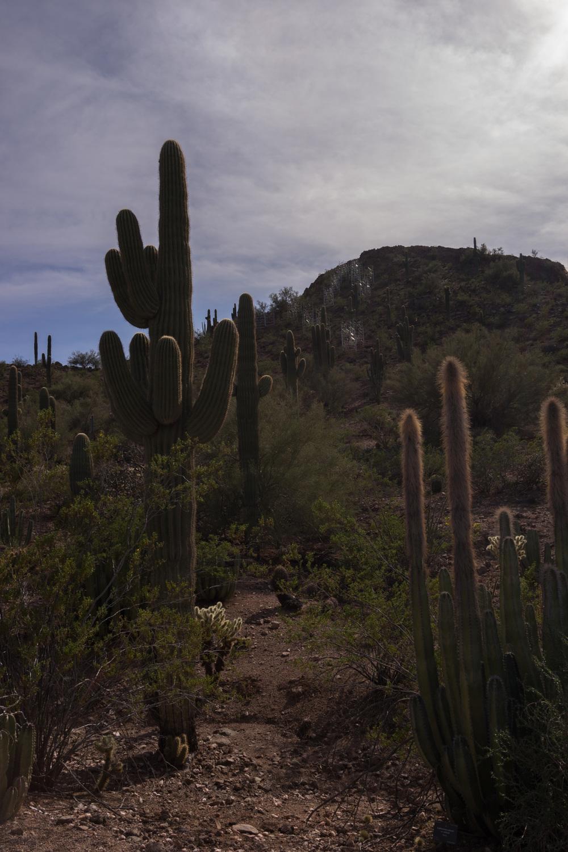 Tucson Day 7-35.jpg
