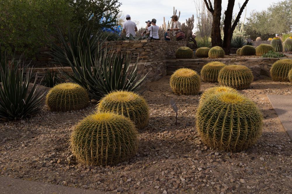 Tucson Day 7-40.jpg