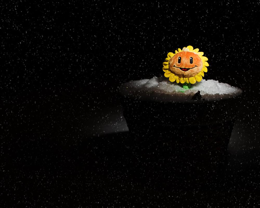 Toys365_2013-01-25_Sunflower_in_Snow_-5-Edit.jpg