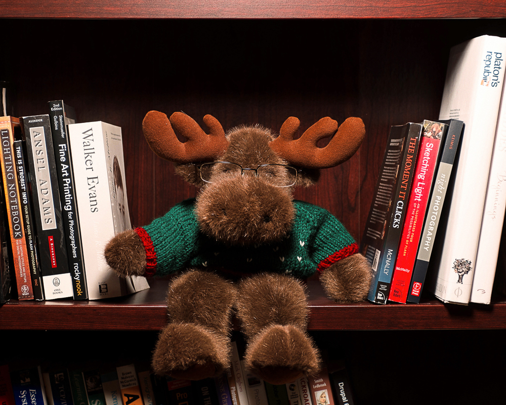 Bookmoose.  Please do not disturb.
