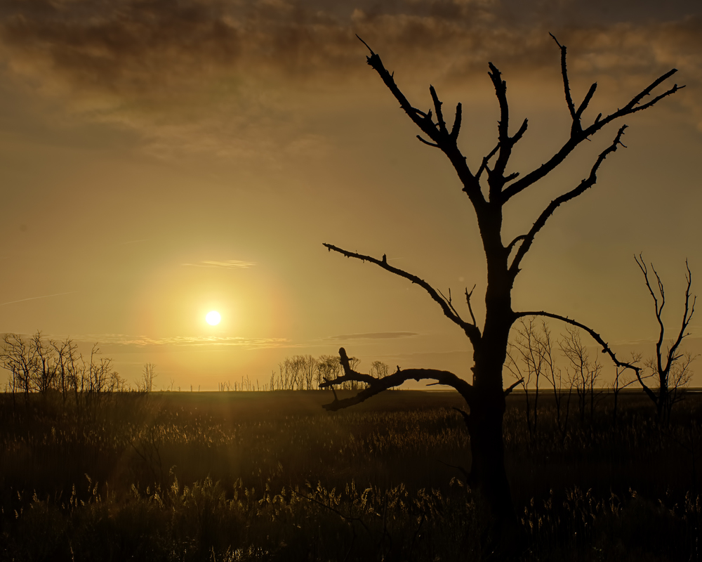 Sunrise at Bombay Hook National Wildlife Refuge on 4-16-2013