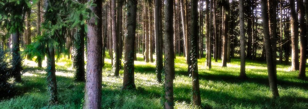 2013-09-09_Klmash_Park_Trees_6x17.jpg