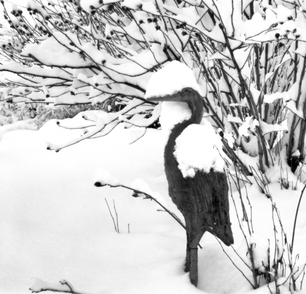 4x5_for_365_project_036_Backyard_Snow_egret.jpg