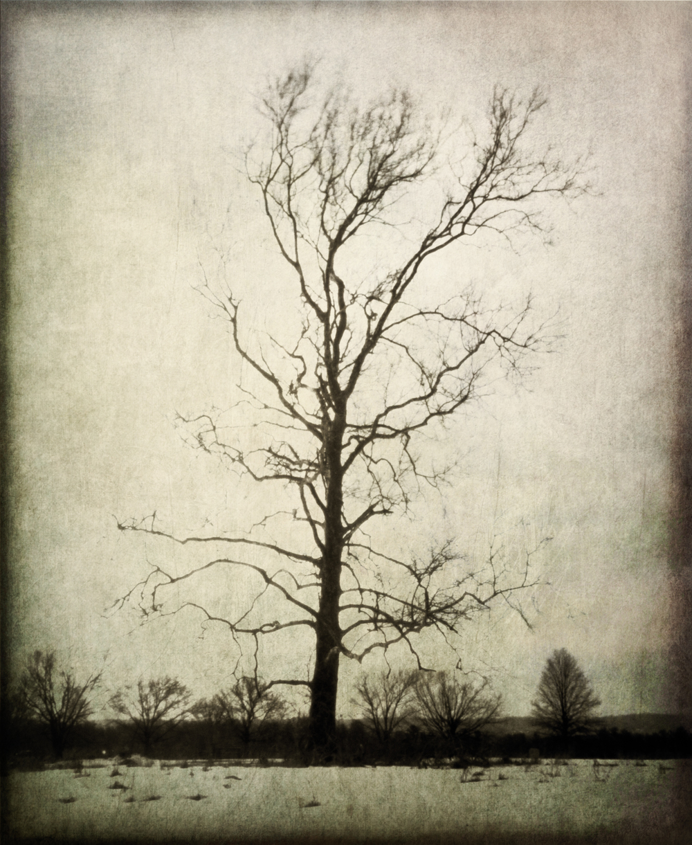 4x5_for_365_project_057_Valley_Forge_NHS_Tree.jpg