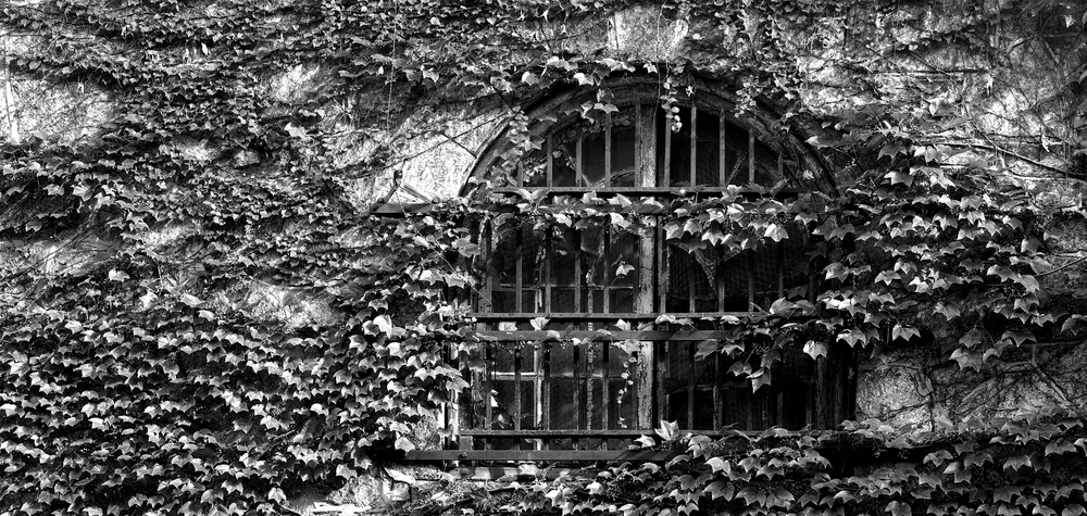 4x5_for_365_project_0274_esp_ivy_window.png
