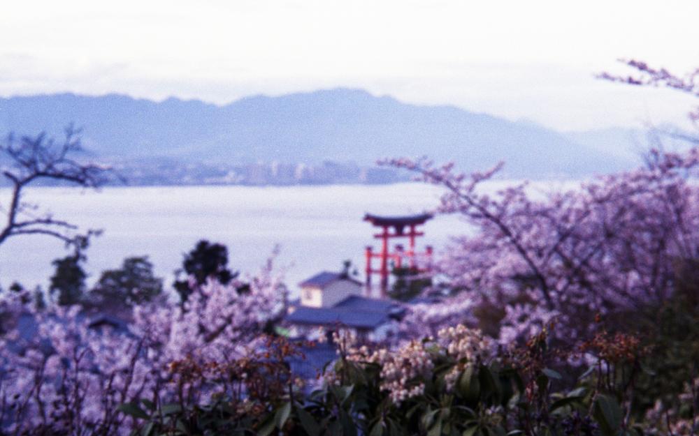 20160417-20160402尾道宮島fuji400009.jpg