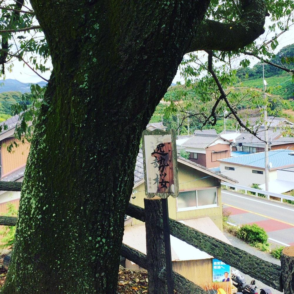 橘逸勢神社にて