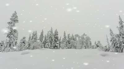 stock-footage-snow-falling-on-a-winter-landscape-and-a-snow-covered-pine-forest-in-a-beautiful-wintry-background.jpg