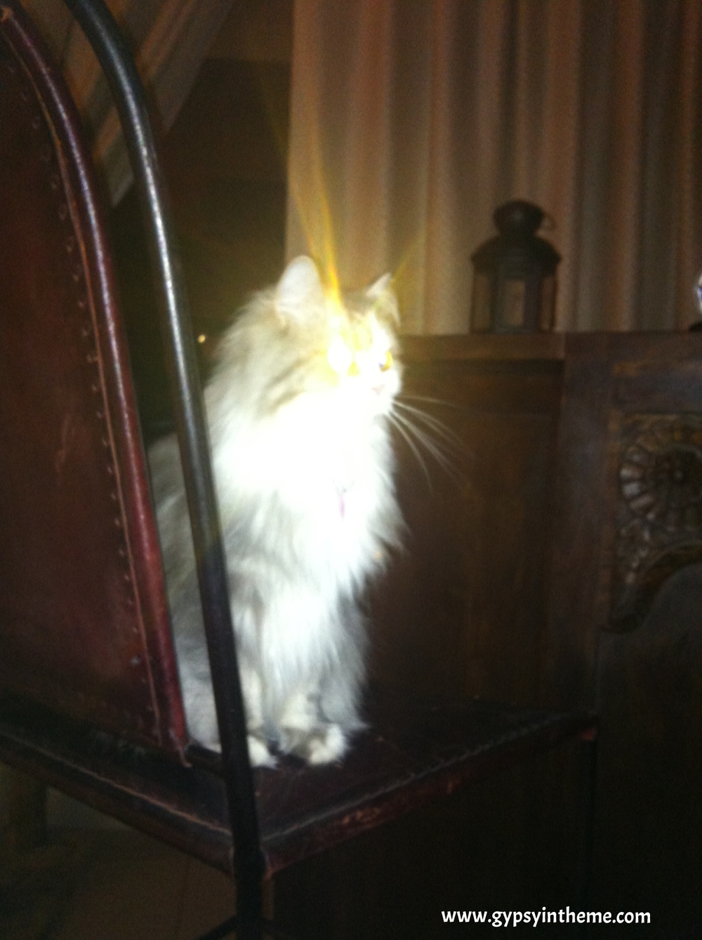 If Bar Cat's halo doesn't inspire, what in the world will?
