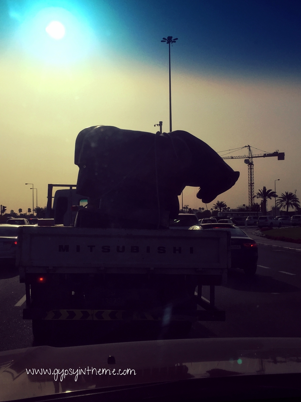Random bucking bronco in the back of a pickup truck in the Middle East ...