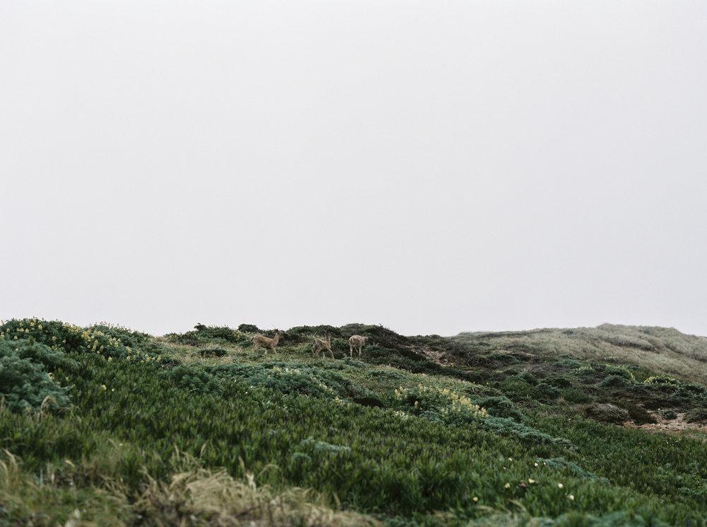 BrittanyBrianEngagementsFilm (34 of 106).jpg