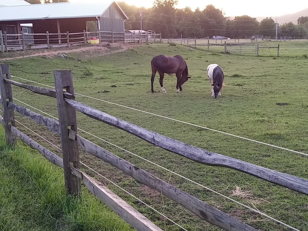 Some of the horses on the property