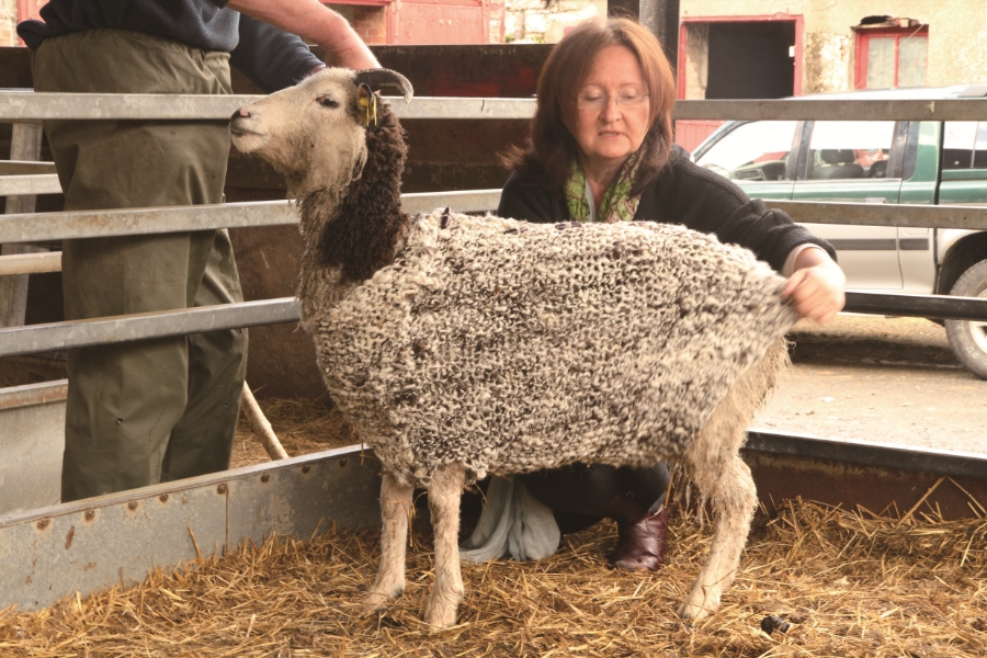 """Knitting the woolen jumper for the sheep I sheared"", Sligo, Ireland, 2012 Courtesy of the artist"