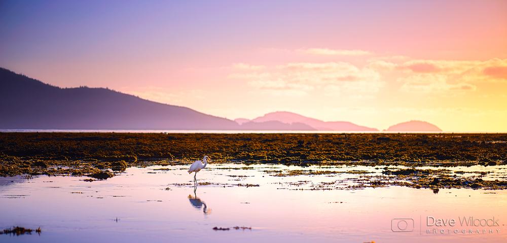 Hamilton-Island-Bird-Pink-Hues.jpg