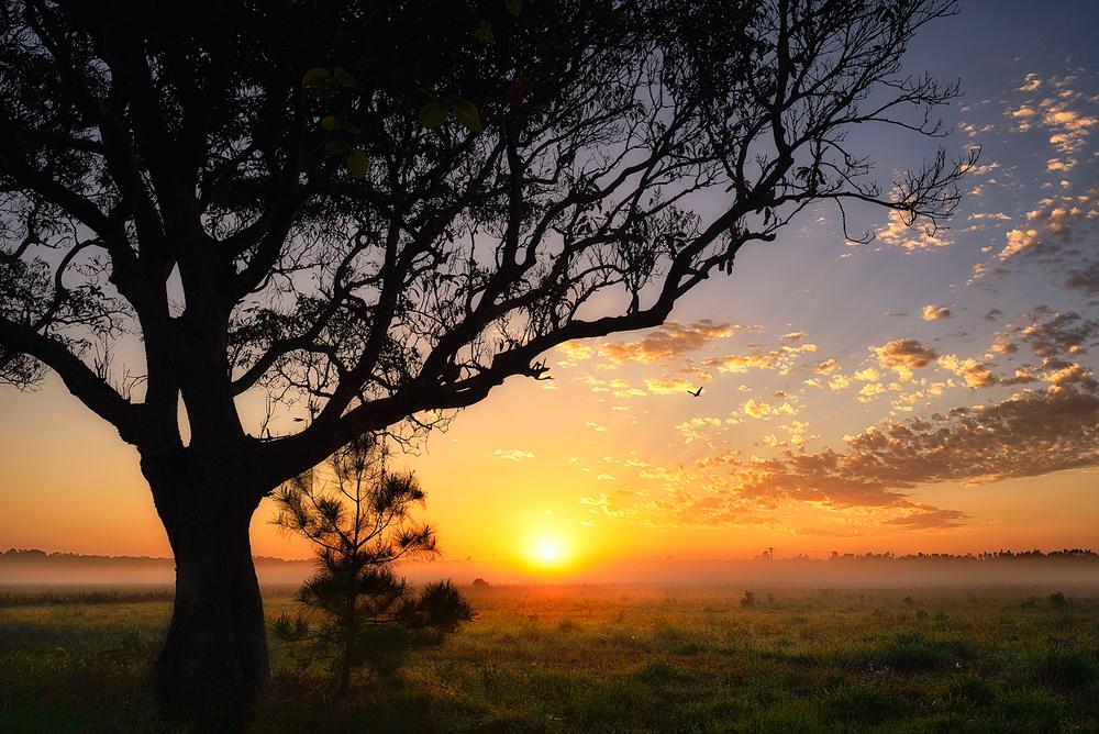 Mt-coolum-Spot-Tree-Foggy-Sunrise.jpg