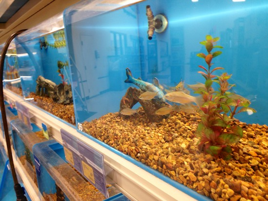 Petsmart is on its way to peterborough and they 39 re hiring for Fish tanks petsmart