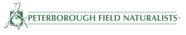 PFN_logo.png