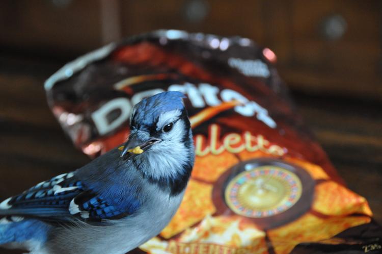 Hank loved Doritos and Fresca