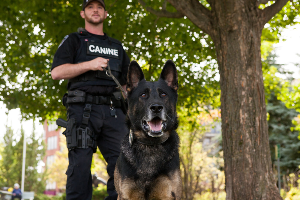 Constable Tim Fish with Wolfe (Peterborough Police supplied photo)