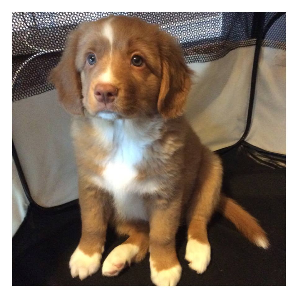 Jack as a puppy