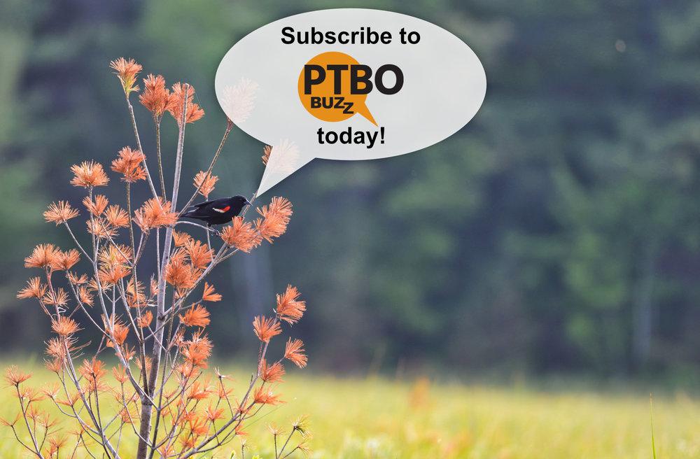 SubscribeToPtboBuzz.jpg