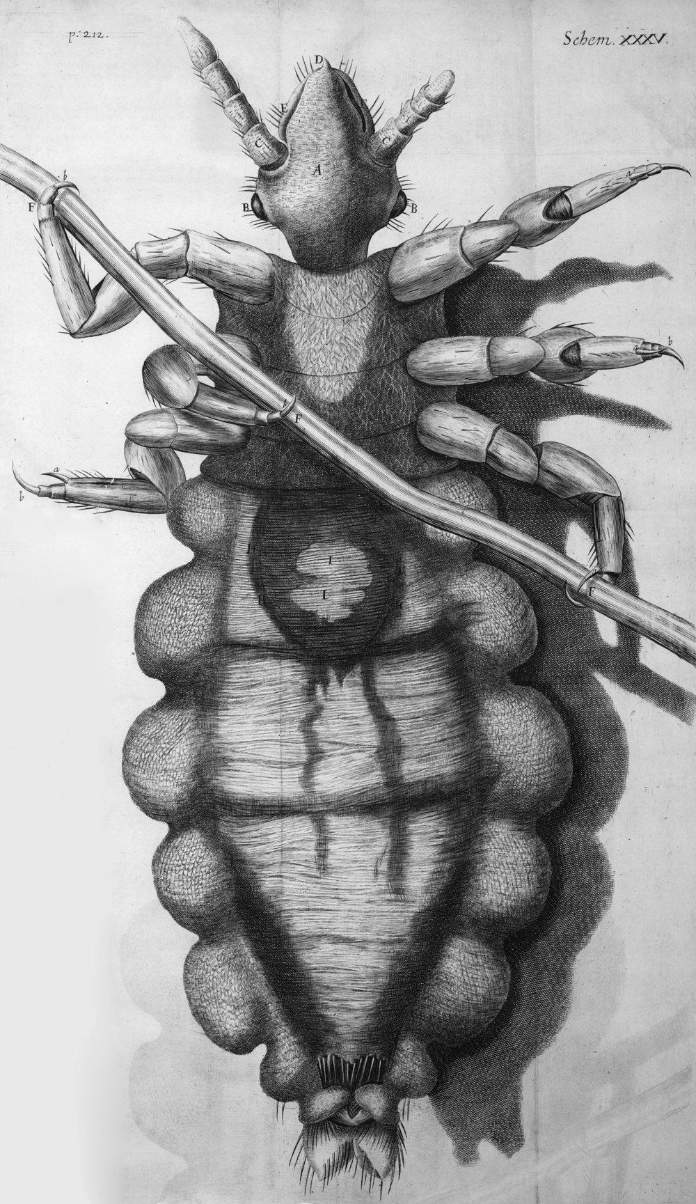 Louse_diagram,_Micrographia,_Robert_Hooke,_1667.jpg