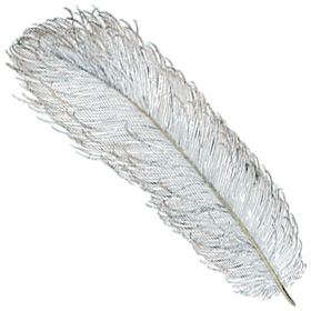 favicon-feather-angled.jpg