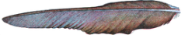 50px-Plume_d'aigle_(Millot-1907).png