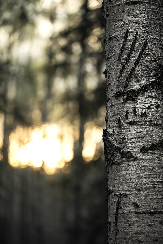 MLP_Landscape_03.jpg