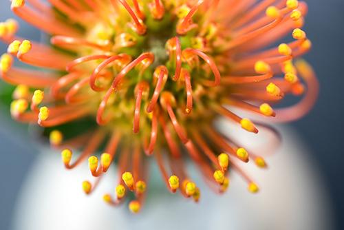 Botanicals-7_SM.jpg