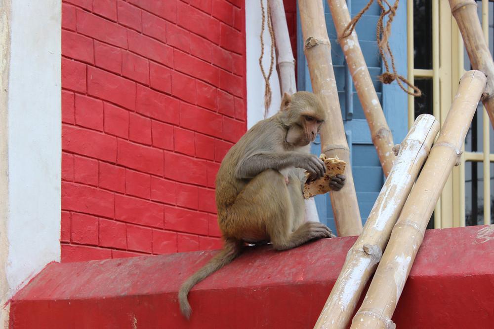 De monkey